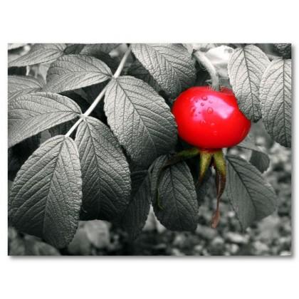 Αφίσα (επιλεκτικός, κόκκινος, φυτό, μαύρο, λευκό, άσπρο)